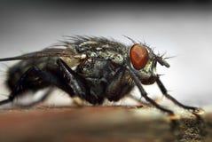 Macro de la mosca foto de archivo