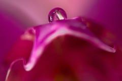 Macro de la orquídea Imagen de archivo libre de regalías