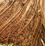 Macro de la peau d'un palmier image libre de droits