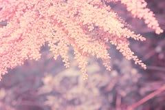Macro de la planta salvaje del verano Imagen de archivo