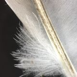 Macro de la pluma Fotografía de archivo
