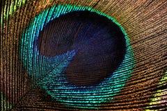 Macro de la pluma del pavo real Imagen de archivo