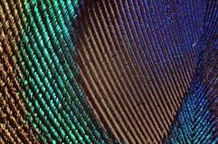 Macro de la pluma del pavo real Imagen de archivo libre de regalías