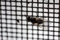 Macro de la red de mosca Foto de archivo libre de regalías