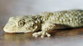 Macro de la salamandra Fotografía de archivo