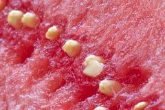 Macro de la semilla de la sandía Fotografía de archivo libre de regalías