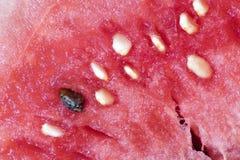 Macro de la semilla de la sandía Fotos de archivo libres de regalías