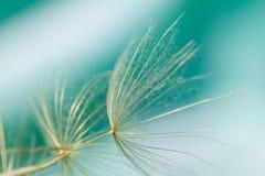 Macro de la semilla del diente de león Imagen de archivo libre de regalías