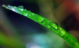 Waterdrops sur la lame d'herbe Photos libres de droits