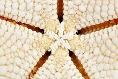 Macro de las estrellas de mar Fotos de archivo