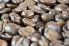 Macro de los granos de café III Imágenes de archivo libres de regalías