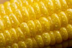 Macro de los granos frescos del maíz Fotos de archivo