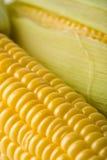 Macro de los granos frescos del maíz Imagenes de archivo