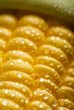 Macro de los granos frescos del maíz Fotografía de archivo libre de regalías