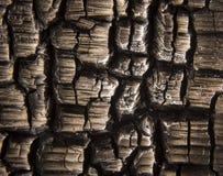 Macro de madera quemada Imagenes de archivo