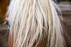 Macro de observação do cavalo Foto de Stock