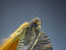 Macro de papillon, oiseau, poulet, perroquet Images libres de droits