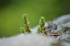 Macro de pequeñas plantas Imagen de archivo libre de regalías