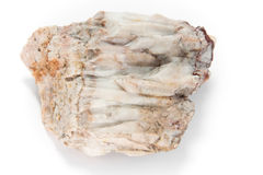 Macro de piedra Imagen de archivo libre de regalías