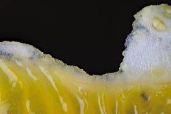 Macro de pulpe orange Image stock