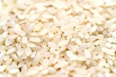Macro de riz blanc Photo libre de droits