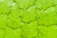 Macro de textuurachtergrond van Victoria Amazonica Giant Water Lilies stock afbeelding