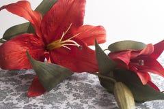 Macro de Tiger Lily rojo en fondo decorativo Imagen de archivo