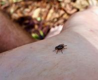 Macro de uma mosca em um pé do ` s da pessoa Imagem de Stock Royalty Free