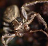 Macro de un cierre de la araña encima del tiro fotografía de archivo libre de regalías