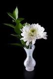Macro de un crisantemo blanco Imagen de archivo