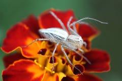Macro de un insecto que se sienta en la flor imágenes de archivo libres de regalías