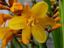 Macro de una flor amarilla foto de archivo libre de regalías
