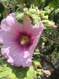 Macro de una flor en el viento foto de archivo libre de regalías