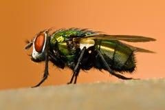 Macro de una mosca imágenes de archivo libres de regalías