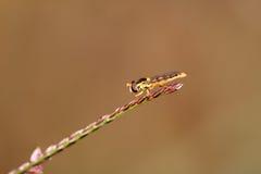 Macro de una mosca colorida Fotografía de archivo