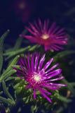 Macro de una pequeña flor púrpura con el fondo verde Imagenes de archivo
