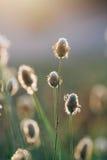 Macro de una planta Imagen de archivo