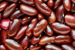 Macro de vue supérieure des haricots rouges Concept sain et de nutrition de nourriture Photographie stock libre de droits