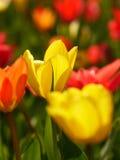 Macro dei fiori luminosi Fotografia Stock Libera da Diritti
