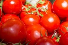 Macro dei pomodori freschi del mazzo al mercato locale Fotografia Stock