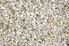 Macro dei semi di sesamo Fotografie Stock