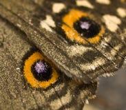 Macro del ala de la mariposa Imagen de archivo libre de regalías