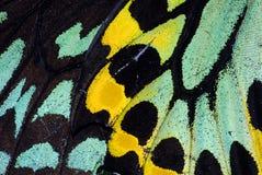 Macro del ala de la mariposa foto de archivo libre de regalías