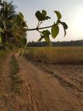 Macro del camino largo Foto de archivo libre de regalías