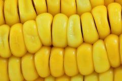 Macro del cereale Fotografia Stock Libera da Diritti