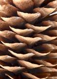 Macro del cono Fotografia Stock