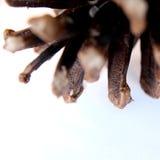 Macro del cono del pino Foto de archivo libre de regalías