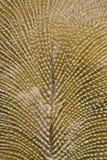 Macro del coral de seta. Imágenes de archivo libres de regalías
