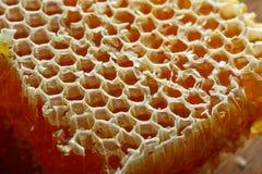 Macro del detalle del panal de la miel Fotos de archivo libres de regalías