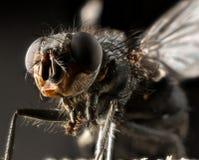 Macro del extremo de la mosca fotos de archivo